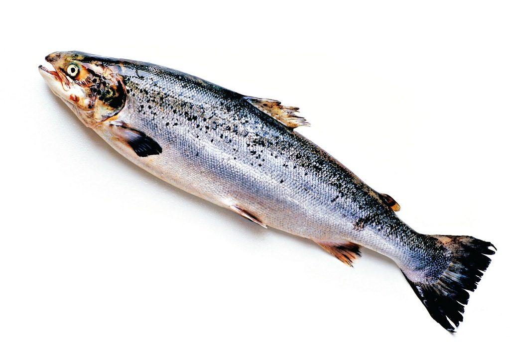 Самостоятельно разводим опарыша в рыбе