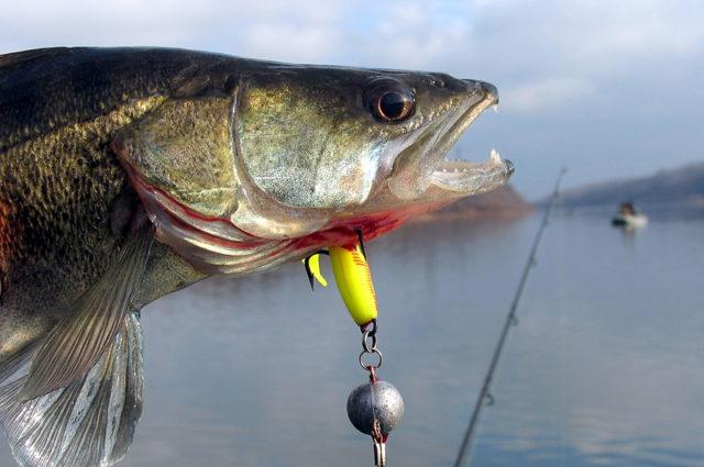 Джиг – прогрессивный стиль рыбной ловли, который основан на игре приманки на дне водоёма с помощью спиннинговой снасти