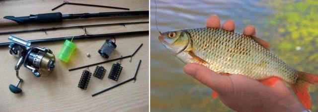 Большинство рыболовов применяют фидер именно для лова плотвы