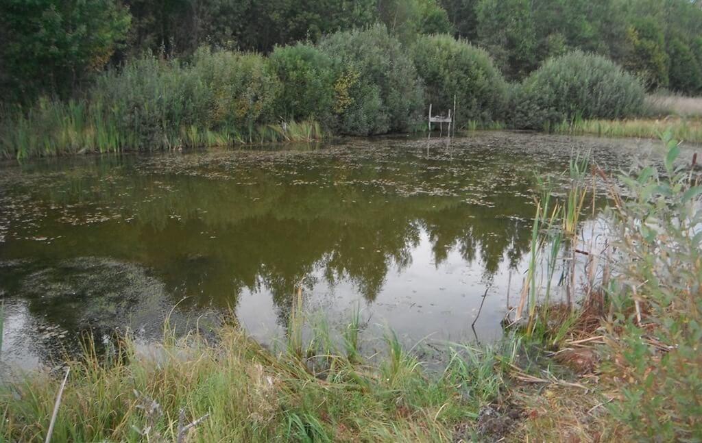 Ротан распространяется по водоему неравномерно