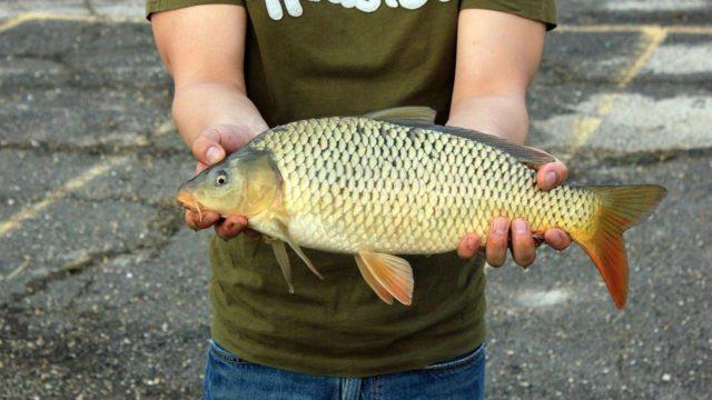 Чтобы мамалыга пришлась по душе рыбе, рыболов должен следовать простым и понятным правилам в процессе приготовления