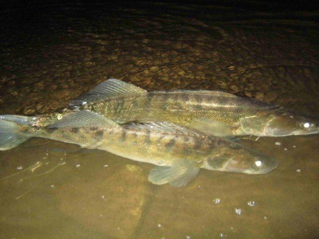 Хорошие знания особенностей водоема, выбранного для рыбалки, позволяют добиться очень неплохих результатов