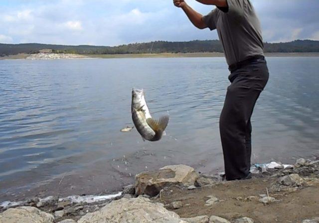 Поймать клыкастого не так-то и легко – нужно знать, где, когда и на что ловить – поэтому рыбалка на этого речного охотника включает в себя выдержку, терпение и опыт рыболова