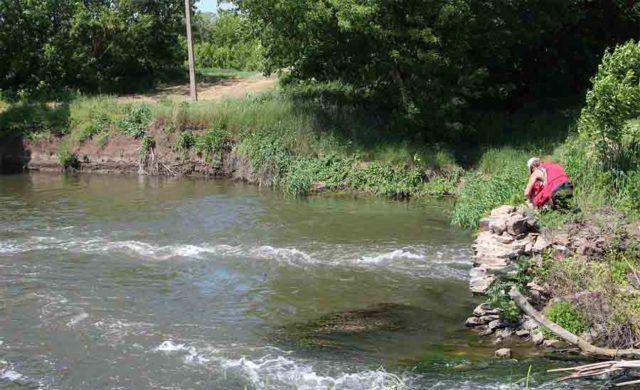 В больших реках хищника еще можно обнаружить вдоль обрывистых берегов и в прибрежных ямах