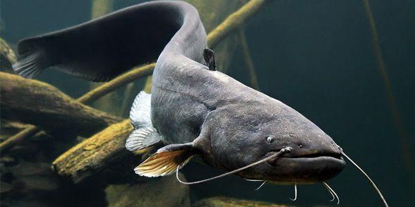 В каждом регионе страны действуют свои сроки на введение нерестового запрета на ловлю рыбы