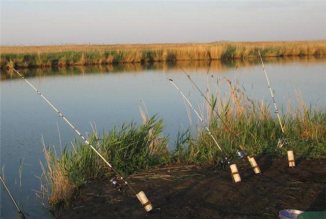 Дно водоёма должно быть относительно чистым, без густой водной растительности и сильной закоряженности