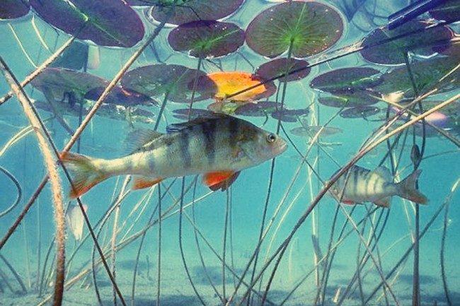 В процессе ловли на течении и на водоемах без него донки следует оснащать по-разному