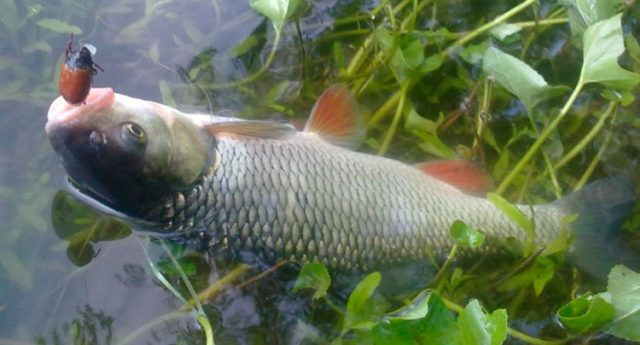 Размеры удилища выбираются в зависимости от конкретных условий рыбалки, которые связаны с характером водоема