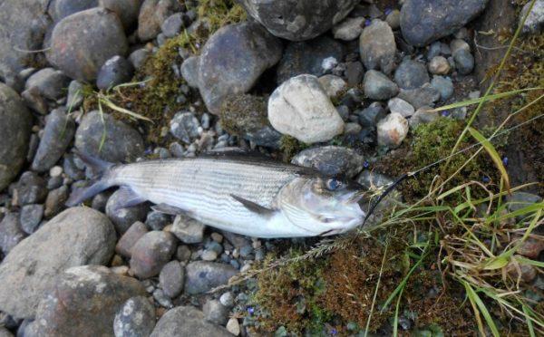Ловить рыбу нахлыстом несложно, но опытные рыбаки считают это искусством