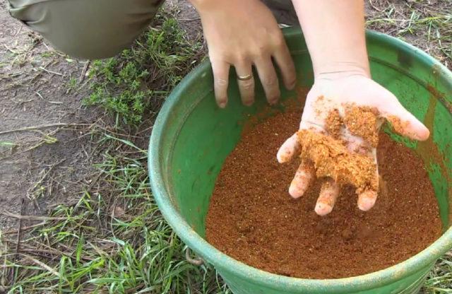 Простой вариант прикормки — использование зерновой смеси