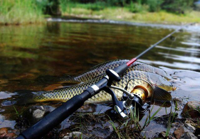 В силу того, что этот вид рыбы является очень достойным соперником для любого рыбака, удилище для карповой ловли имеет ряд конструктивных особенностей