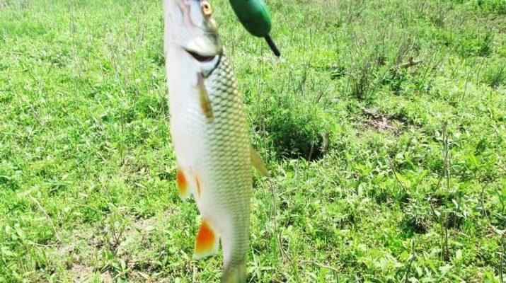 Поплавочная удочка для ловли голавля