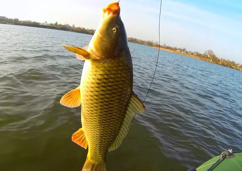 Как и сколько нужно варить пшено для рыбалки