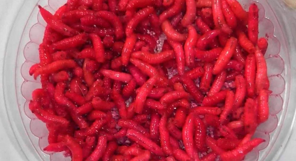 Опарыш красного цвета