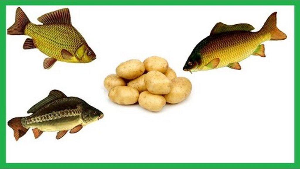 Как сделать тесто для рыбалки для разных видов рыб