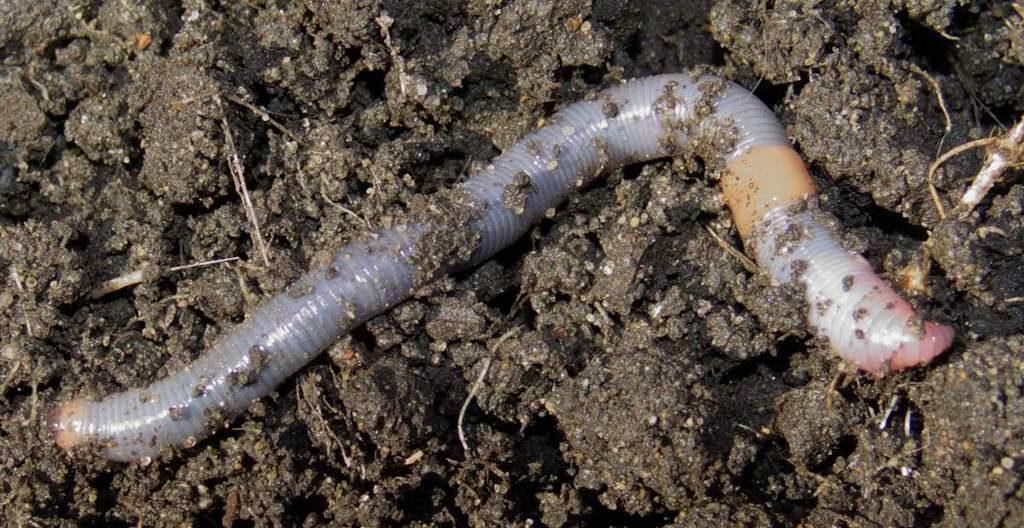 Грунт для разведения червей