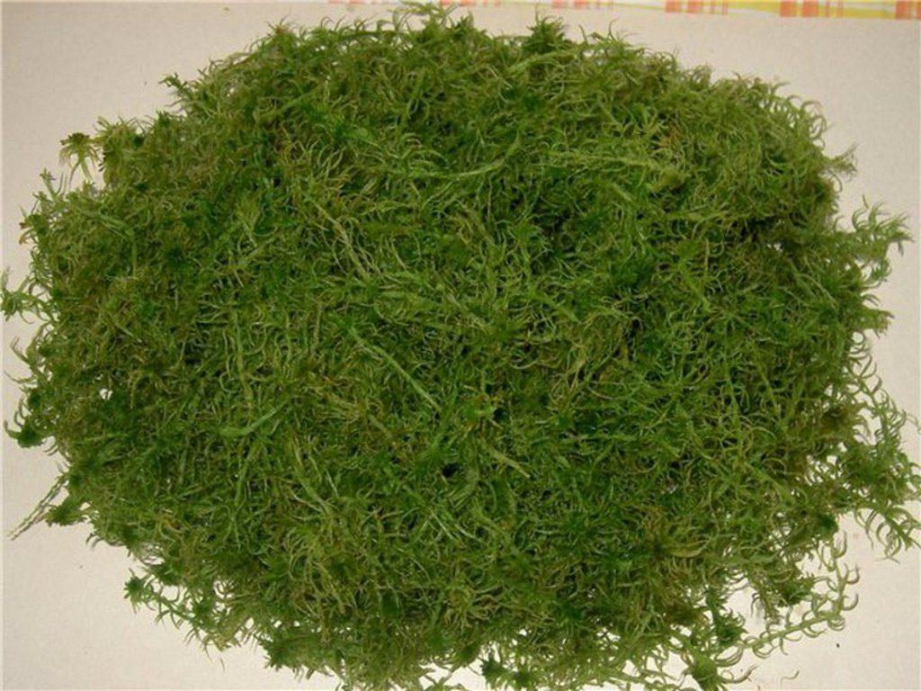 Болотный мох