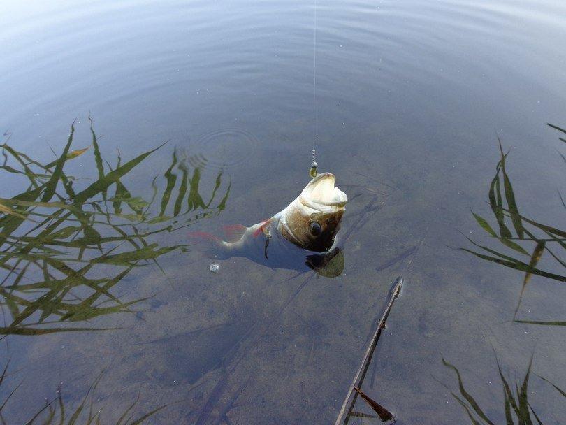 Отводной поводок на окуня монтаж способы — Здесь рыба