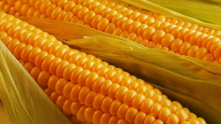 Как приготовить кукурузу для рыбалки
