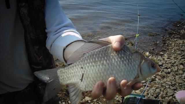 Для фидерной ловли желательно использовать надежные фирменные катушки, так как такой тип ловли предполагает частые забросы