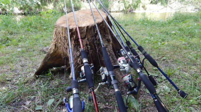 Использование спиннинга требует больших навыков от рыболова, так как в этом случае нужно уметь хорошо играть приманкой, чтобы привлечь рассматриваемый вид рыбы