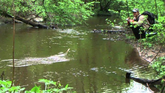 Ловят в них щуку летом и зимой, а ранней весной даже самые маленькие речки соединяющиеся с крупными водоемами, могут принести весомый трофей