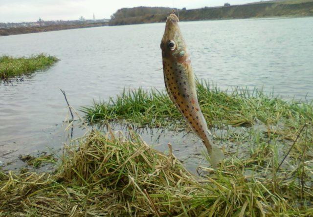 Наиболее активно ловится ёрш весной перед и после нереста, а так же осенью, когда вода начинает постепенно остывать после летнего зноя