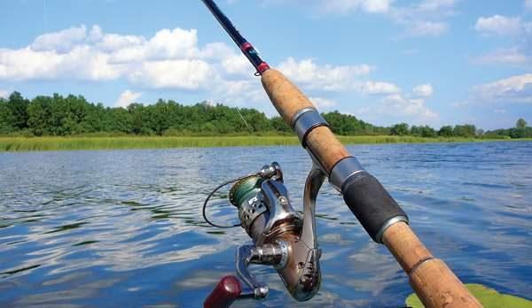 Для ловли красноперки среди подводной растительности нередко используют оснастку сплит- шот