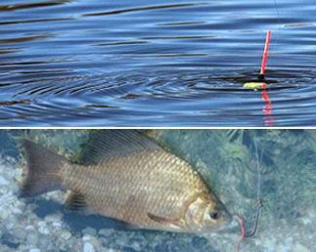 Ловля карася весной на поплавочную удочку и фидер. Рыбалка весной