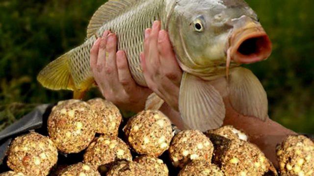 Ведь не прикармливая, поймать эту рыбу почти нереально