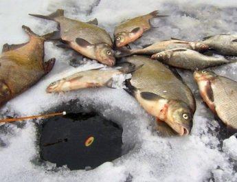 Чем прикармливать леща на зимней рыбалке?
