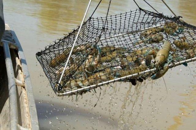 Когда лучше всего ловить раков — Здесь рыба