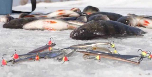 Ловля судака на спиннинг весной, летом и осенью: снасть
